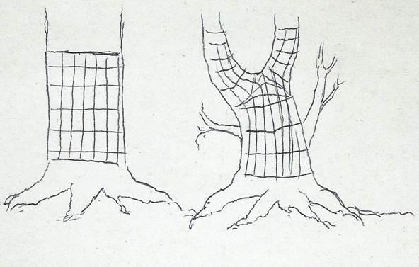 Holzfasern, Holzfaserverlauf