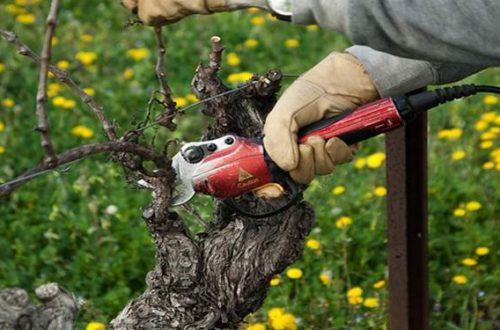 Akku Rebschere Test, Elektrische Gartenschere